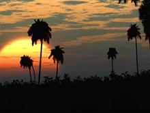 Poubel Coconuts