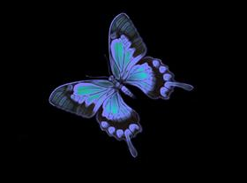 Blacklight Butterfly 03