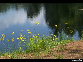 the lake and flowers