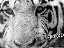 Tiger XP