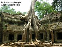 Ta Phrom Temple - Cambodia
