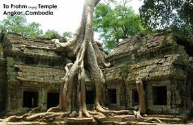 Ta Phrom Temple - Cambodia