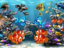 Under the Sea v2