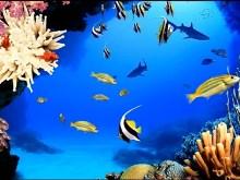 Aquarium IV