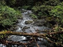 Forest Creek II