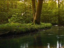 forestcreek