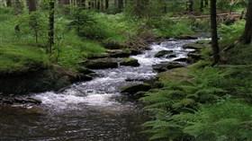 Creek Greifenbach Germany