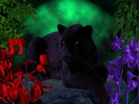 Black Cat in Green Moonlight