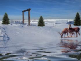Winter Scene Dreamy