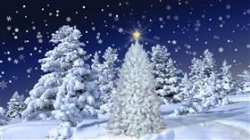 White Christmas 2013