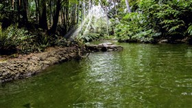Jungle_River
