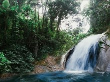 Excotic_Forest_Waterfall
