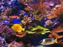 Colorful Reef and Fish